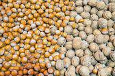 Orzechy włoskie i laskowe — Zdjęcie stockowe