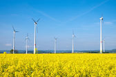 Yellow rapeseed field and windwheels — Stock Photo
