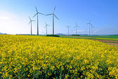 Windwheels and rapeseed — Stock Photo