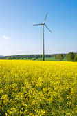 Windwheel and rapeseed field — Stock Photo