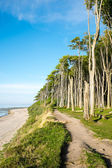 Beach and beech trees — Stock Photo