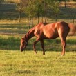 Stock Video: Horse on green meadow