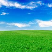 зелёный луг — Стоковое фото