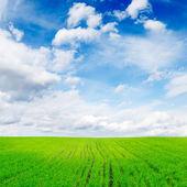 Campo sobre un fondo de cielo azul — Foto de Stock