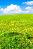 çayır — Stok fotoğraf