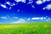 łąkowych — Zdjęcie stockowe
