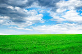 Green spring field and the blue sky — Stock Photo