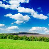 Meadow — Stockfoto