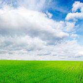 Lente veld — Stockfoto