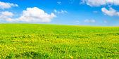 Jarní pole — Stock fotografie
