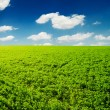 Stock Photo: Spring field