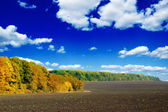 Field and autumn wood — Stock Photo