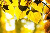 Autumn foliage — Stock Photo