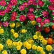 Blossoming flowerbeds in the park — Stock Photo #41483247