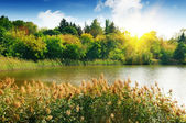 Forest lake in the rays of dawn — Stock Photo