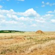 Wheat field after harvest — Stock Photo #42792827