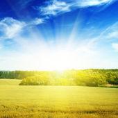 Field illuminated by the sun — Stock Photo