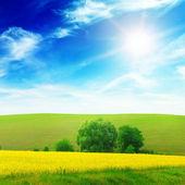 Green field illuminated by sunlight — Foto Stock