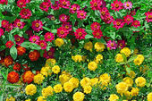 Blossoming flowerbeds — Stock Photo