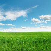Louka a krásná modrá obloha — Stockfoto
