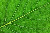 Leaf of a plant  — Stock Photo