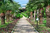 красивая пальмовая аллея в парке. — Стоковое фото