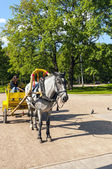 Horse and cart in the park — Stok fotoğraf