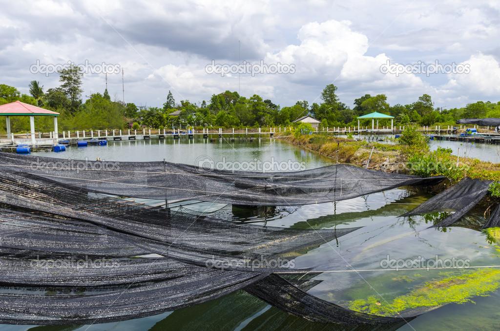 Fish Farm Ponds In Thailand Stock Photo Rogkoff 21646189