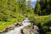 Mountain stream flowing among the alpine fields surrounded by the Alps. Mountains of Lombardy. Region of Brescia. Northern Italy — Stock Photo