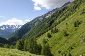 Vista delle alpi con rocce e vegetazione in estate nel nord italia, lombardia, regione della vetta dell'adamello di brescia in una giornata limpida — Foto Stock