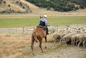 Rider in Chile — Stock Photo