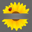 Stock Vector: Sunflower and ladybird on grey background.