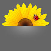 Sunflower and ladybird on grey background. — Stock Vector