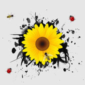 Sunflower on black background. — Stock Vector