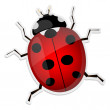 Ladybird isolated on white — Stock Vector