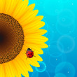 Sunflower and ladybird on blue background. — Stock Vector