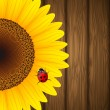 Vector de stock : Sunflower and ladybird on wooden background