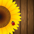 Sunflower and ladybird on wooden background — Cтоковый вектор