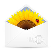 Open envelope with sunflower and ladybird — Stock Vector