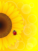 Sunflower and ladybird on yellow background. — Stock Vector