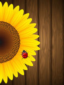 Sunflower and ladybird on wooden background — Stock Vector