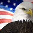 Bald eagle with american flag out of focus. — Stock Photo #14584675