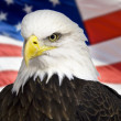 Stock Photo: Bald eagle with americflag out of focus.