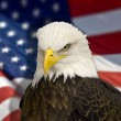 Bald eagle with american flag out of focus. — Stock Photo