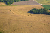 Aerial view of farm fields and trees in mid-west Missouri early morning — 图库照片
