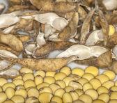Soybeans on white background — Stock Photo