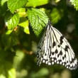 Butterfly resting on leaf — Stock Photo