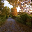Path in autumn forest — Stock Photo #14762339