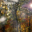 Path in autumn forest — Stock Photo #14762343