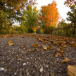 Stock Photo: Path in autumn forest
